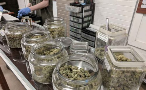 Budtender Working in Medical Marijuana Dispensary