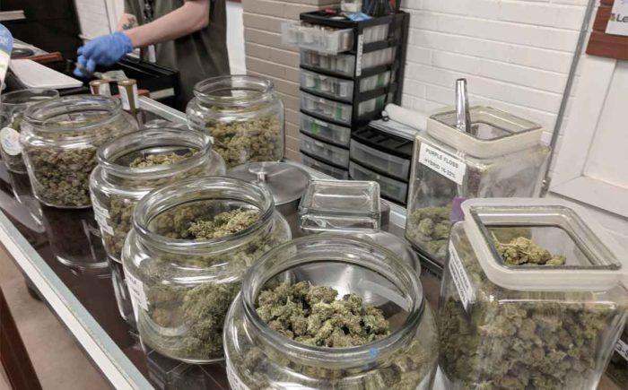 Budtender Working in Medical Marijuana Dispensary